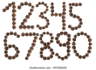 all number made of pine cone on white