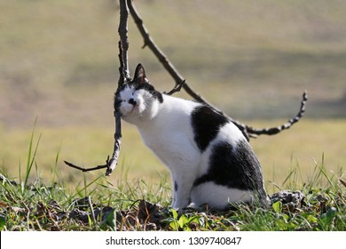 All sales mean a donation to an animal charity. A very happy black and white cat nudging a tree a rescue pet symbol of California Colorado Illinois Tennessee abandoned just after Italy's 2016 quake