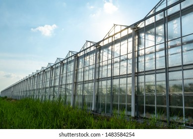 All seasons fresh vegetables, fruits and flowers, agriculture in Netherlands, big modern greeenhouses in Limburg, exterior view