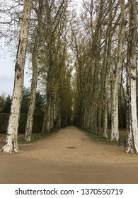 An allee of trees at the grounds of Napolean's old hunting lodge in Versailles, France.