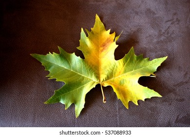 Allegory of Autumn, of old age, of old age, of maturity,tree leaf banana shadow, on dark background, visual allegories, visual metaphors, photographic allegories, photographic metaphors,yellows,green,