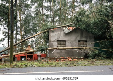 allegory of bad luck, cruel fate,  plucked trees, fallen eucalyptus trees on houses,Catastrophic effects of great storm, explosive cyclogenesis, hurricane, in Galicia, Spain, visual allegories,