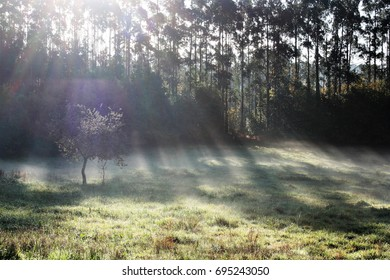 allegory of God, of the divine, of enlightenment,the sun streaming through the trees  peace, calm, serenity, harmony, fullness, well-being, nature, natural, contemplate, meditate, breathe, grow,