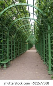 Alley with an arch of braided green plants in the Summer garden in St. Petersburg in Russia.
