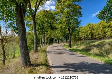 alley in autumn in Masuria in eastern Poland