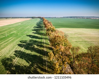 Alley of autumn trees among green fields in countryside