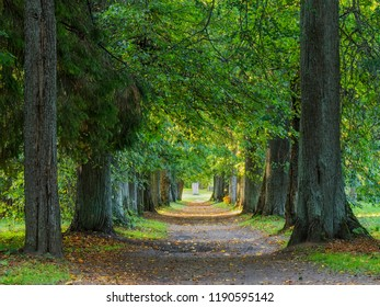 Alley of autumn woods in the park