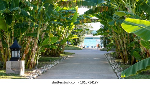 Alley of banana trees leading to the sea