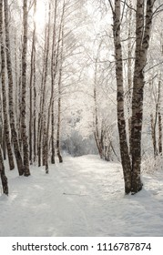 Alley between trees at park covered with snow