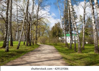 Alley of birches in Yasnaya Polyana