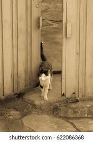 alley cat in shantytown in Seoul, Korea