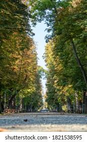 Alley of the Central Park, Cluj-Napoca, Transylvania, Romania, in September