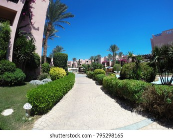 Alley with green bushes and high palm trees with hotel buildings aginst blue clear sky