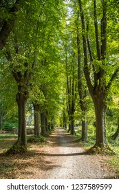 Alley of linden trees in Poland