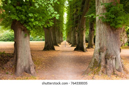 Alley of oaks in the Hirschpark at Blankenese, Germany