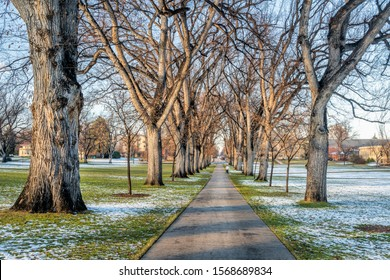 alley of old American elm trees in late fall scenery - historical Oval of Colorado State University campus - landmark of Fort Collins