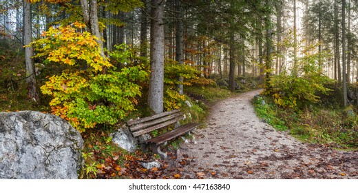 Alley in old autumn park with fallen leaves on path and grass, landscape