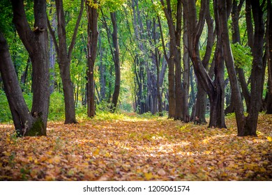 Alley on the autumn forest with golden falling leaves, outdoor tranqil background