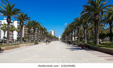 alley of palm trees on the seafront in Spain on a sunny day