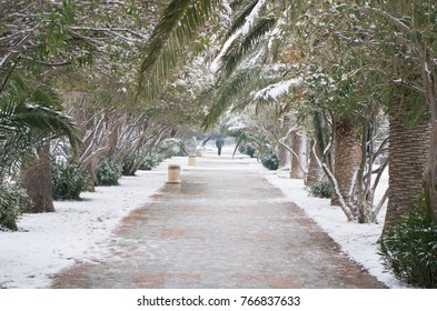 alley with palm trees in the snow