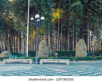 Alley in the park . Batumi. Georgia