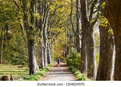 Alley with tall trees and jogger. Autumn colours. Leaves on the ground.