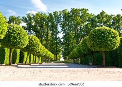 Alley of topiary green trees with hedge on background in ornamental garden on a blue sky background in Rundale royal park. Latvia. Vibrant summertime outdoors horizontal image.