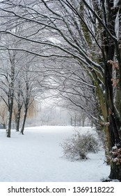 alley of trees in germany covered with fresh fallen snow