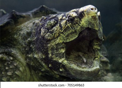 Tortoise Mouth Stock Photos, Images & Photography | Shutterstock