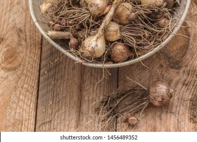 Allium caeruleum bulbs or  blue globe onion, blue ornamental onion, blue-of-the-heavens, blue-flowered garlic; syn. Allium azureum Ledeb.) is an ornamental bulbous plant of  onion genus on   table
