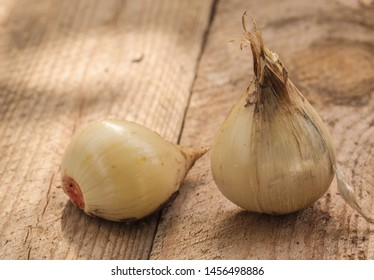 Allium hollandicum, common names Persian onion  or Dutch garlic bulbs on table.