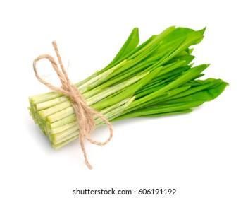 Allium ursinum â?? known as ramsons, buckrams, wild garlic, broad-leaved garlic, wood garlic, bear leek, or bear's garlic. Isolated.