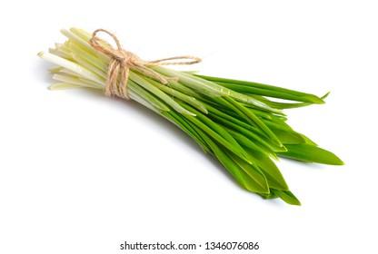 Allium ursinum, known as wild garlic, ramsons, buckrams, broad-leaved garlic, wood garlic, bear leek or bear's garlic. Isolated on white background.