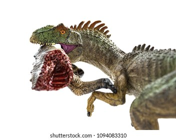 allosaurus  biting a dinosaur body with blood on white close up