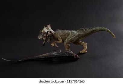 allosaurus biting a dinosaur body on dark background