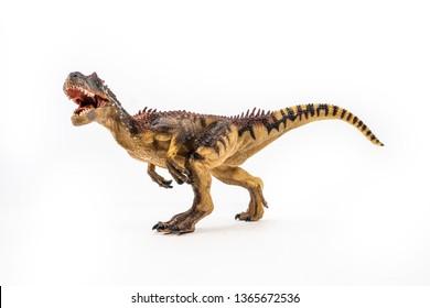 Allosaurus ,dinosaur on white background .
