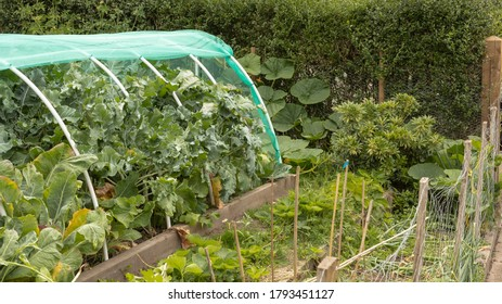 Allotment with many different vegetables growing