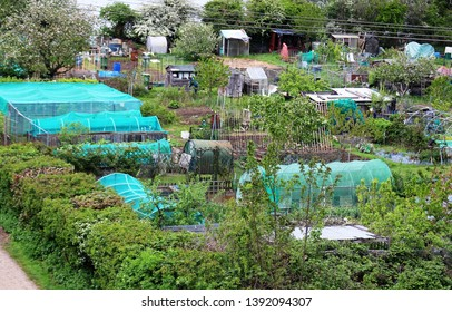 Allotment plots in England; view from above.