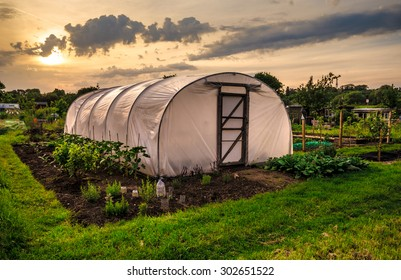 Allotments at sunset - Polythene tunnel as a plastic greenhouse in an allotment with growing vegetables at sunset.