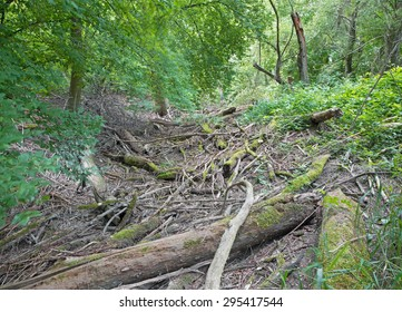Alluvial forest on the waterfront of Danube in National park Donau-Auen in Austria.