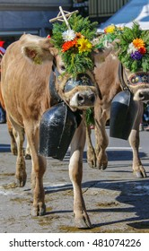 Almabzug - ceremonial driving down the cattle from the mountain pastures into the valley in autumn in Sch�¼pfheim, Switzerland