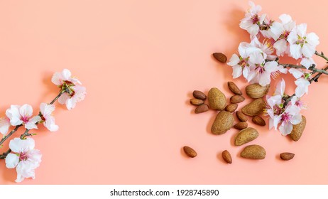 Almond blossom branches and almond fruits on the pink background. Banner photo with space for dispalying your cosmetics or any more products. Pedestal spring background wth natural elements.