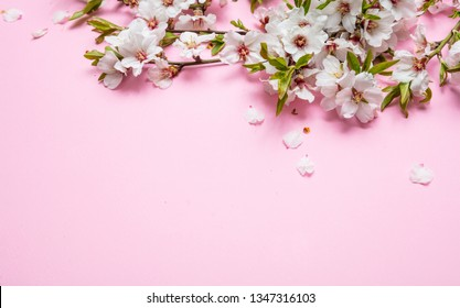 Almond blossoms bouquet on pink background, copy space, closeup view