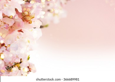 Almond blossoms over blurred nature background