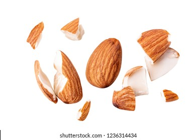 almond break fly isolated  Collection.
