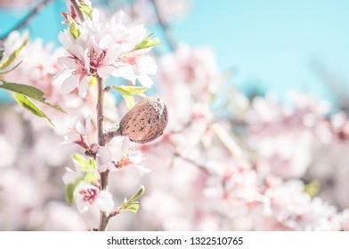 Almond on an almond tree branch