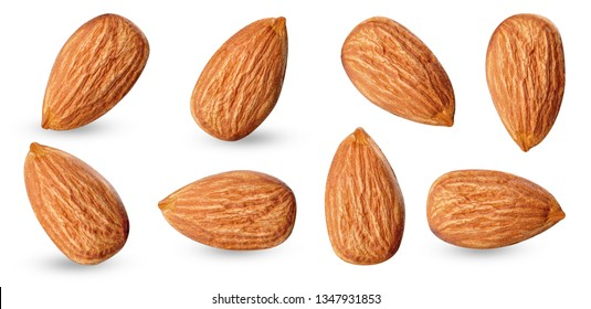 almond raw piece collection set.almond full macro shoot 