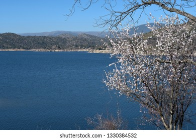 Almond tree in bloom with lake mountains and castle so far