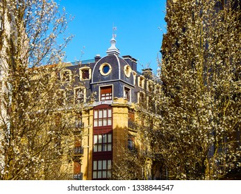 Almond trees blooming at the beginning of spring on a street in the city of San Sebastian with typical European building in the background. San Sebastian, Guipuzcoa. Spain.