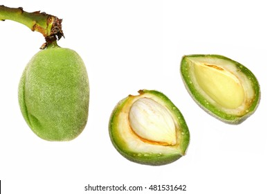 ALMONDS. Fruits on a branch. Fresh green one-piece almond open. Growing and harvesting. Isolated on a white background